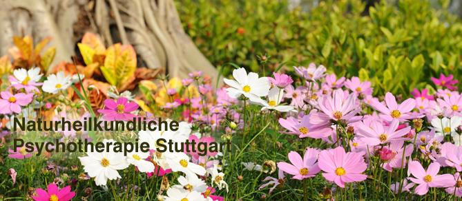 Psychotherapie Stuttgart Maier, Bachblüten, NLP, Biofeedback, Homöopathie bei Angststörungen, Panikattacken, Zwängen, Lebenskrisen